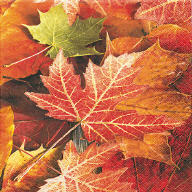 Servietten Herbst Maple Leaves